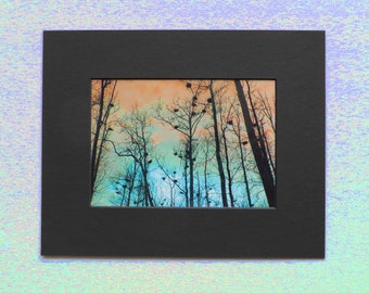 Matted 5x7 Heron Heights Fine Art Print Photography, Signed Artwork, Tree Wall Art Home Decor