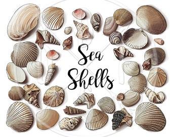 A0119 - Seashells, Coral Coast Shells, Sea Shell - Digital Clip Art, Clipart, Instant Download, Downloadable Print, Printable. 40 PNG files.