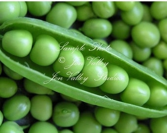 Early Alaska Heirloom Pea 150 Seeds Tender and Sweet Loves cool weather produces abundantly & earlier than most
