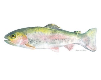 Rainbow Trout Watercolor Print - 10 x 8 / 11 x 8.5 - Fishing Art - Fisherman Painting - Fish