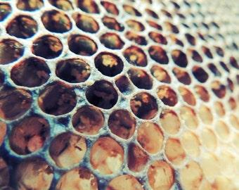 Honeycomb Photograph - Bee Honey Comb Structure -  Honeycomb Cells - Bee Hive - Nature Art - Kitchen Art Decor - Abstract Art