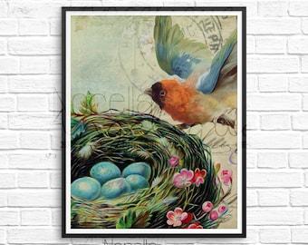 Bird Wall Art, Vintage Bird Art, Printable Wall Art, Printable Art, Wall Art, Wall Decor, Printable, Art Print, Wall Print, Digital Art