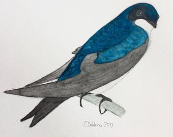 Bird art swallow picture swallowArt Original watercolor painting tree swallow Miniature painting  bird art