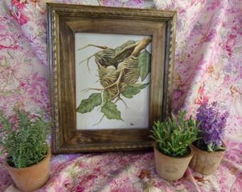 Nesting ( framed Painting )