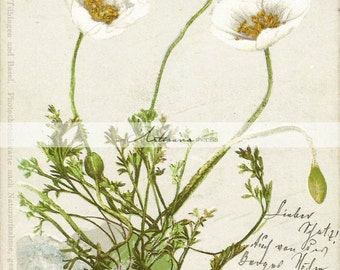 Printable Art Download - Antique Daisies Flowers Floral Art Image - Paper Crafts Altered Art Scrapbook - Vintage Shabby Chic Botanical Art