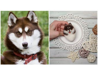 Siberian Husky brown eyes