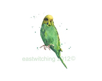 Green PARAKEET Print, green budgie, budgerigar art, birdie