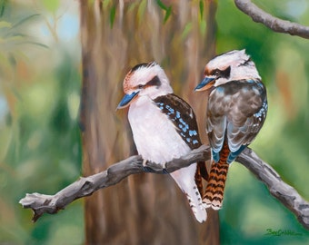 Kookaburras  Our Laughing Feathered Friends