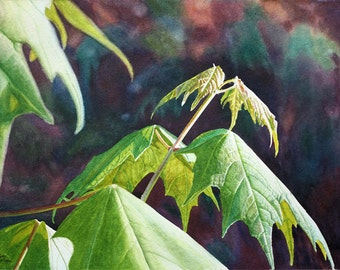 Maple Leaves Art Watercolor Painting Original by Cathy Hillegas, 15x21, Woodland Art, Realism, watercolor trees, green yellow purple brown