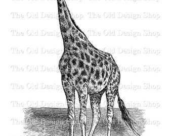 Giraffe Clip Art Vintage Animal Printable Digital Download PNG JPG Image