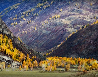 Landscape Photography, Altai Mountain Ptint, Wall Art, Minimalist Art Print, Nature Photography, Autumn Larch Trees Decor, Altai Russia Art