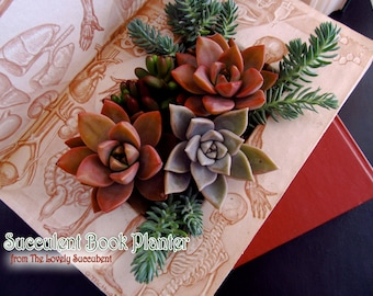 Succulent Book Planter - Vintage and Contemporary Titles