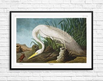 White heron, white herons, white heron art, white heron prints, white heron posters, white heron wall art, heron decor, heron prints, prints