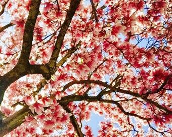 Les Fleurs #1 Magnolias Photograph