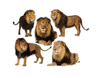 Lion overlay photo animal photoshop png