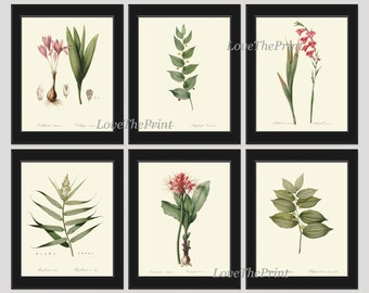 Botanical Print Set of 6 Art  Redoute Antique French Garden Pink Gladiolus Tropical Plants Spring Summer Vintage Room Wall Home Decor