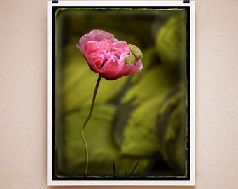 POPPY HATCH - 8x10 Signed Fine Art Photograph