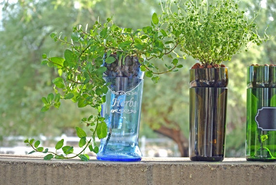 Hydroponic garden in large blue glass upcycled bottle indoor herb hydroponic garden in large blue glass upcycled bottle indoor herb garden vodka gifts bottle planter glass terrarium hydroponics herbs from workwithnaturefo