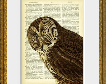 Dictionary Print OWL 33-02 - book page art print - an upcycled antique dictionary page with an antique wise owl illustration - home decor