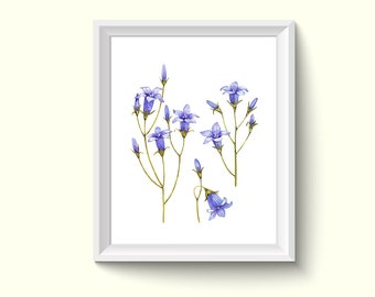 Bluebell Flowers Watercolor Painting Poster Art Print P14