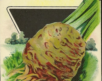 Turnip Rooted Celery CELERIAC Card Seed Co Fredonia New York – New Old Stock Unused Vintage Seed Package – Great Kitchen Decor