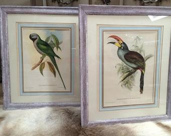 Pair antique lithographs exotic birds
