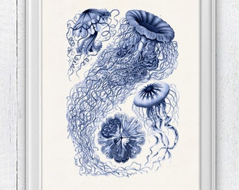 Jelly fish Discomedusae in blue - sea life print- Marine  sea life illustration A4 print SAS113