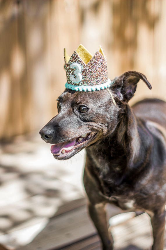 Dog Birthday Crown Hat || Animal Party Hat || Cat Kitty Puppy Pig Birthday Crown Hat || Dog Clothes || Add Any Number || Dog Collar