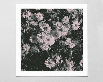 Fine Art Giclée Print - Heliopsis - Floral - Flowers - Photographic Print