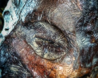 Mummified demon head