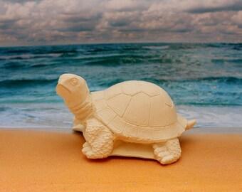 Turtle painting medium size