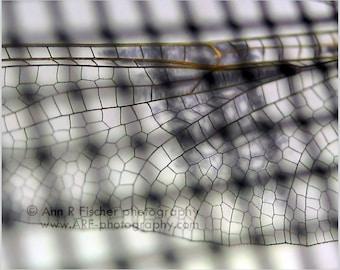 Dragonfly Wing Through Screen Photo, Animal Photography, Miksang Photography, Dragonfly Art, Metallic Print