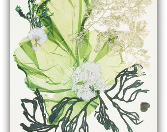 Pressed seaweeds, MADE TO ORDER,  sea weed art, Original seaweed collage, green seaweed pressing, beach cottage decor, victorian algae art