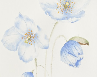 Poppy watercolor - Original 8x10 poppy painting
