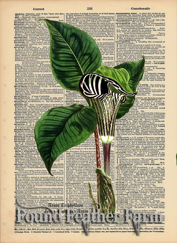 """Vintage Antique Dictionary Page with Antique Print """"Zebra Pitcher Plant with Botanical Name"""""""