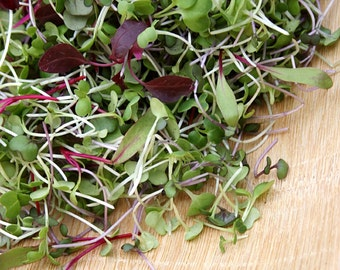 Microgreens Seed Assortment- Sprouting Seeds- 10 Heirloom Varieties- 2,900+ Seeds