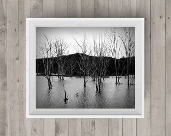Trees Lake|Black and White Photography|Tree Photo|Photography Art|Digital Image|Downloadable Print|Wall Art|Home Decor|Gift Idea