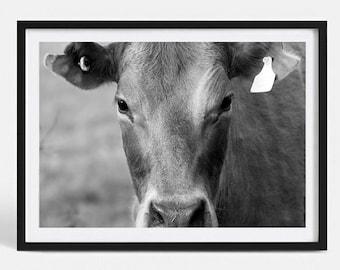 B&W Cow | Fine Art Photography Print | Cow Photography | Animal Photography | Cow Poster Print | Cow Art Print