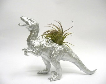 Silver Velociraptor Dinosaur Planter with Air Plant / Coworker Gift / For Her / For Him