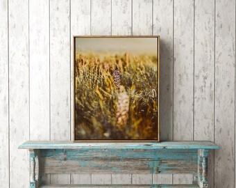 "Nature Print, Flower Print, Flower Art, Botanical Art, Instant Download, Printable Art, Flower Art Print, Nature Photography ""LUPINE DAZE 3"""