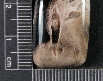Petrified Palm Wood Cabochon Hand Cut PPW5