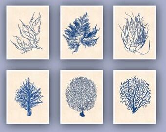 Sea fan art Prints, Ocean seafan Print, Sealife Nautical Art, Blue Seaweed fan art, nursery art, beach cottage decor, coral art, SKU-6SF