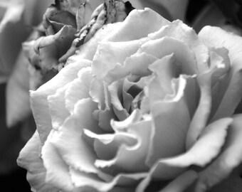 Flower print - Flower photo - Flower decor - Flower art - Black & White print - Black and White decor - Black and White photo - Home Decor