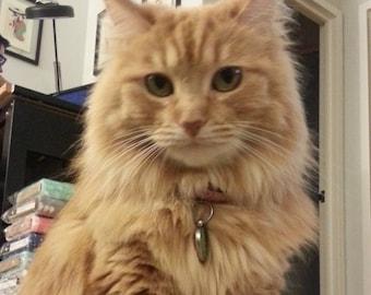 Photo of a beautiful cat