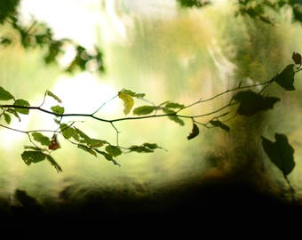 Dreamy Leaves, nature photography, green leaves, autumn leaves, nature home decor, wall art
