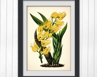 Yellow Botanical art print, Floral wall decor, #138 INSTANT DOWNLOAD