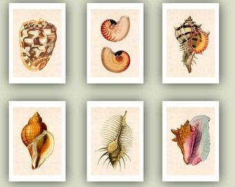 Seashells Prints Set of 6 Sea shells Print 5x7, Collection Ocean sea shells Print, Sealife Nautical Art, beach cottage decor, sea life art