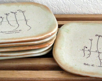 Appetizer Plates -  Set of 6 - Small Plates - Tapas - Sprouts - Hand Thrown Stoneware Pottery