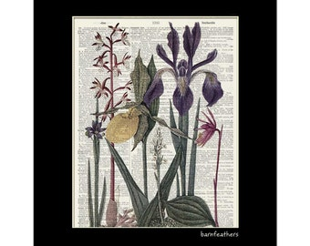Wildflower Illustration - Vintage Illustration printed on a Dictionary Page - Book Art Print  - Home Decor No. P411