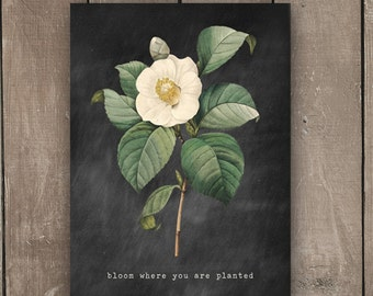 Bloom Where You Are Planted, Vintage Inspired, Botanical Print, Wall Print, Farmhouse Style